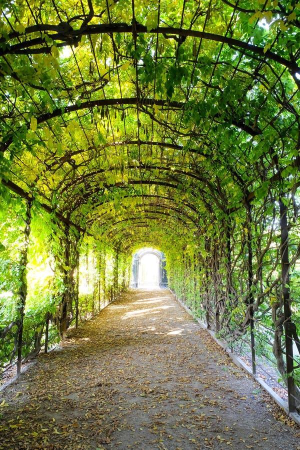 Trajeto da caminhada sob o arco obscuro verde das árvores imagem de stock