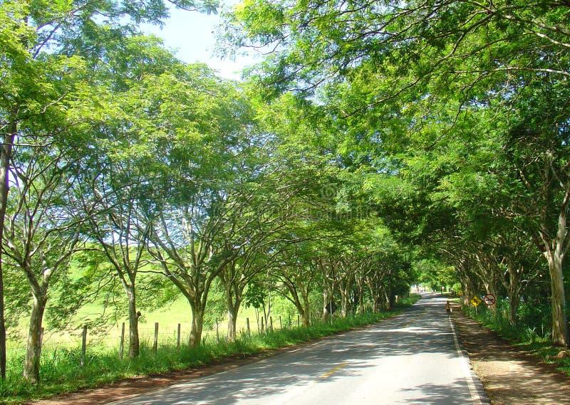 Download Trajeto Da Estrada Das árvores Imagem de Stock - Imagem de feriado, nave: 542995