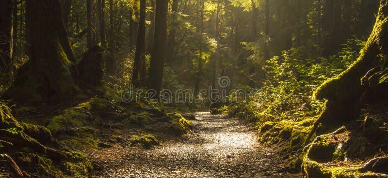 Trajeto da floresta úmida imagem de stock