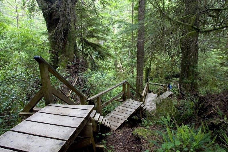 Trajeto da floresta húmida imagem de stock royalty free