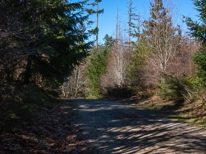 Trajeto da floresta no sol atrasado do inverno em Washington ocidental imagens de stock royalty free