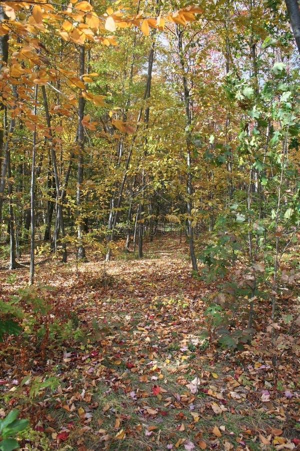 Trajeto da folha do outono imagens de stock