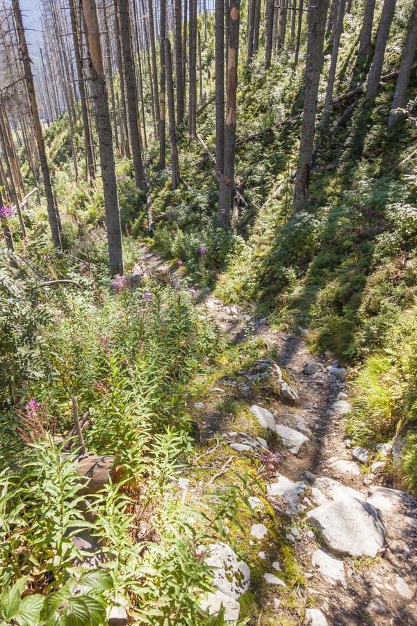 Trajeto da montanha e floresta inoperante - Polônia. fotografia de stock
