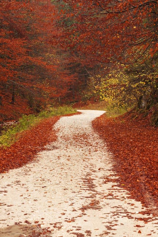 Trajeto da natureza através das folhas vermelhas imagem de stock royalty free