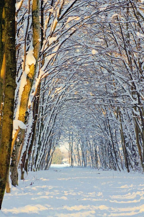 Trajeto da neve na floresta do inverno fotografia de stock royalty free