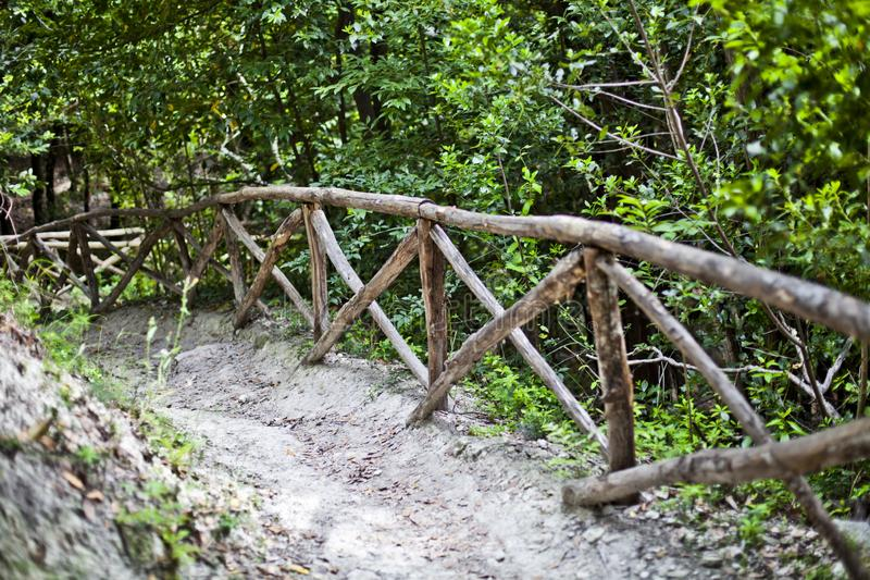Trajeto da pista da passagem com o corrimão em árvores verdes na floresta do verão imagens de stock royalty free