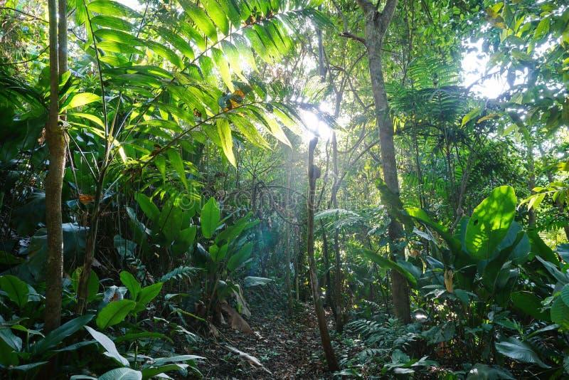 Trajeto da selva através da vegetação luxúria imagens de stock royalty free