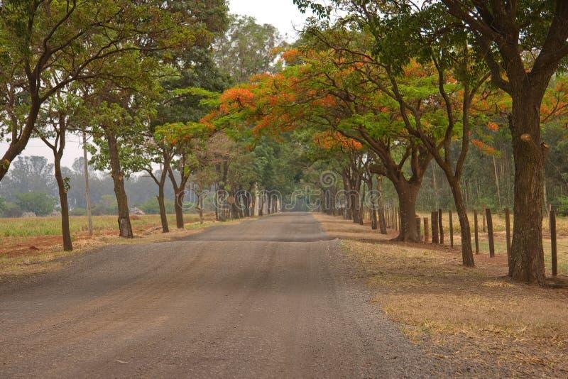 Trajeto das árvores fotografia de stock