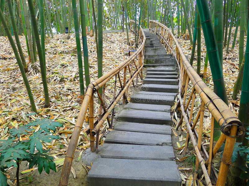 Trajeto de bambu imagens de stock royalty free