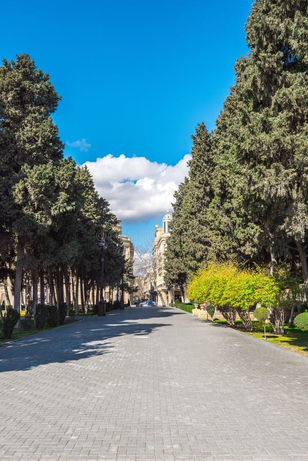 Trajeto de ciprestes velhos no parque de beira-mar nacional na cidade de Baku imagens de stock royalty free