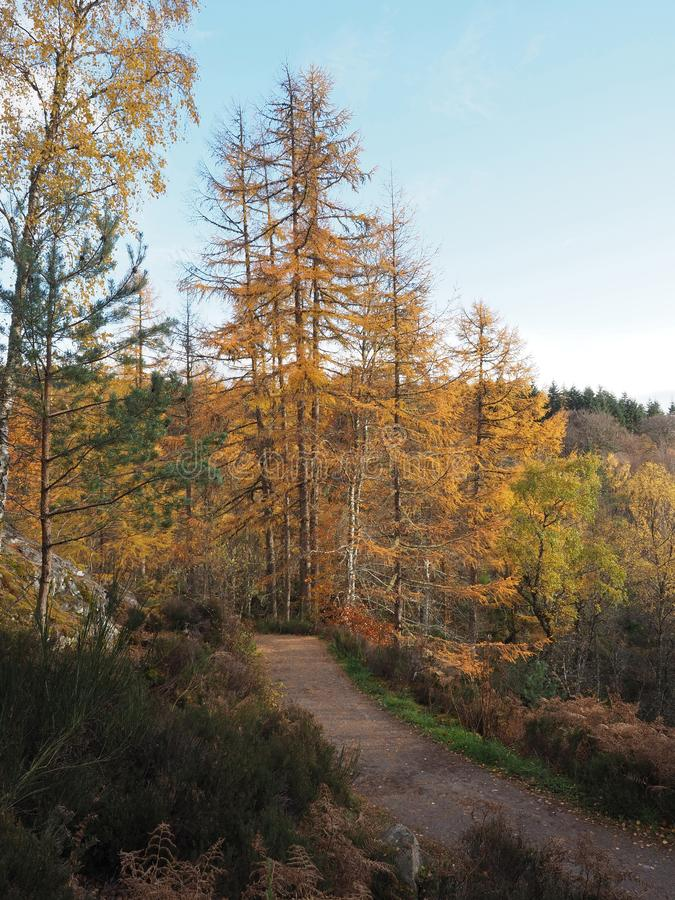Trajeto de enrolamento através da floresta em quedas de Rogie em um dia do outono fotos de stock