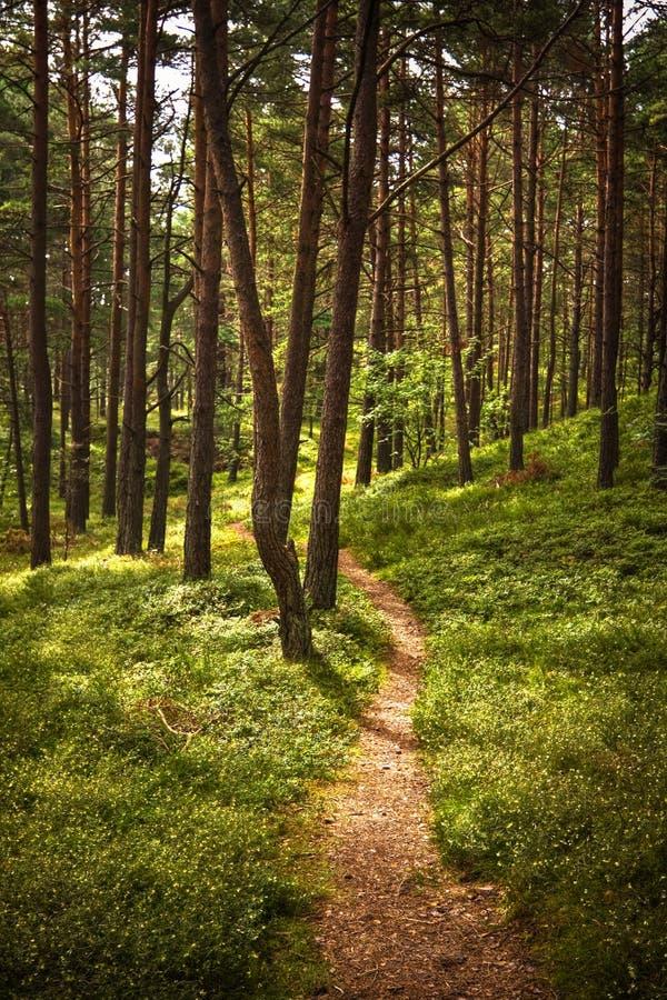 Trajeto de floresta fotografia de stock