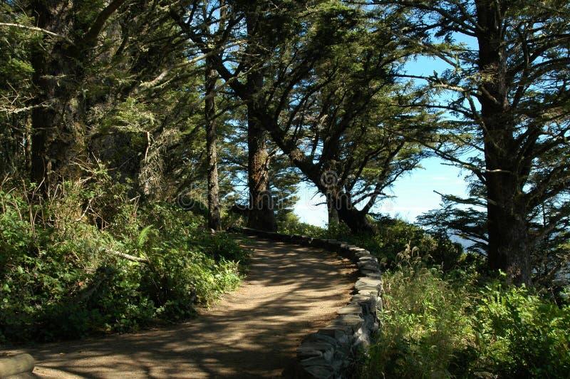 Download Trajeto de floresta imagem de stock. Imagem de oregon, serene - 200275
