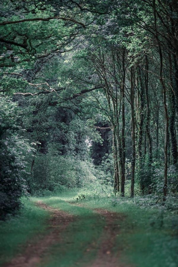 Trajeto de floresta com as trilhas do pneu na mola imagem de stock royalty free