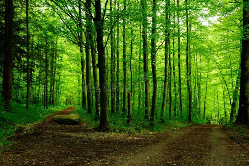 Trajeto de floresta com duas maneiras fotografia de stock