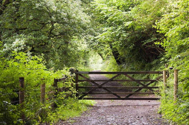 Trajeto de floresta com porta foto de stock royalty free