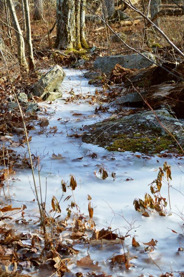 Trajeto de floresta congelado imagens de stock