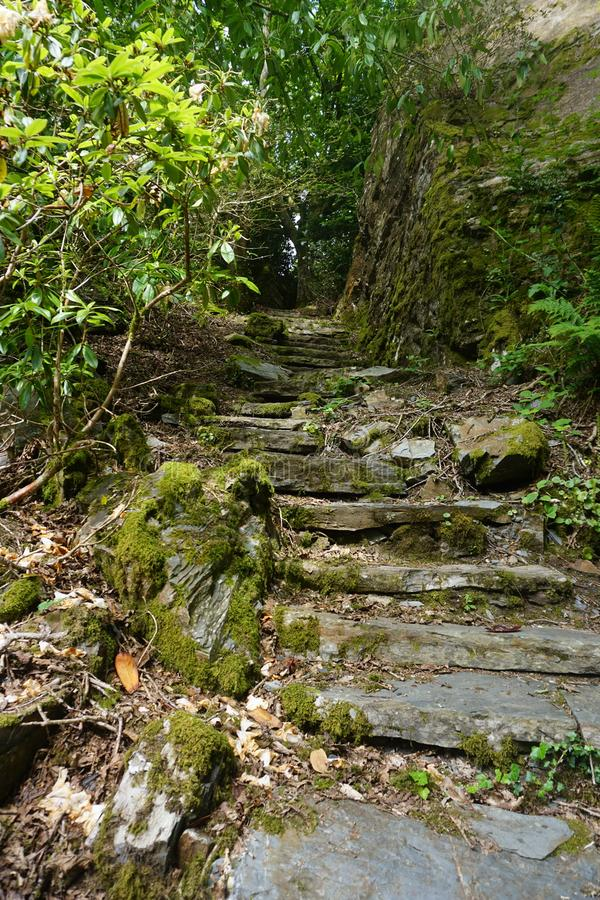 Trajeto de floresta da pedra de Galês foto de stock royalty free