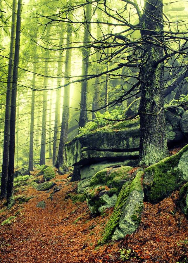 Trajeto De Floresta Do Outono Fotos de Stock