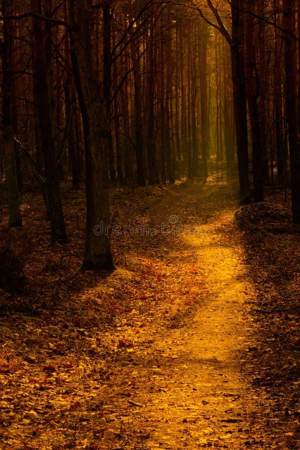 Trajeto de floresta na luz morna do outono fotos de stock