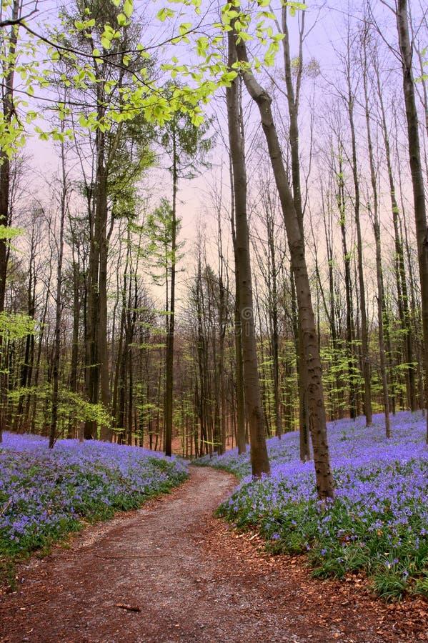 Trajeto de floresta na primavera fotografia de stock royalty free