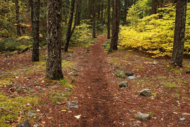 Trajeto de floresta no outono fotografia de stock