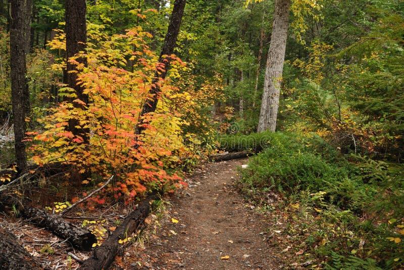 Trajeto de floresta no outono foto de stock