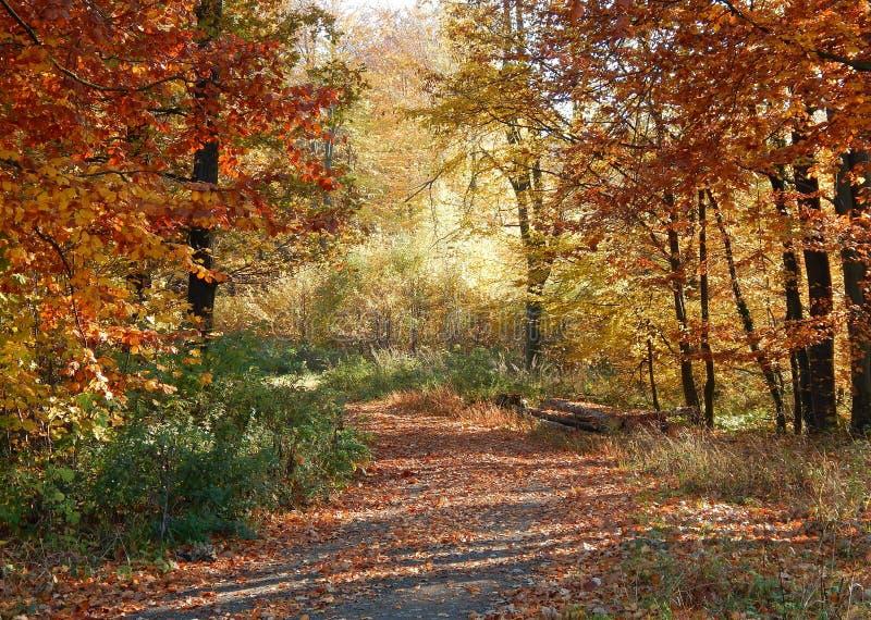 Trajeto de floresta no outono do beaufitul fotos de stock royalty free