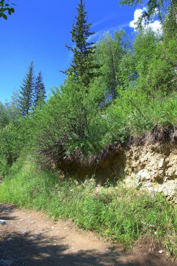 Trajeto de floresta que conduz à parte superior da montanha Altai, Sib?ria, R?ssia Paisagem fotografia de stock royalty free