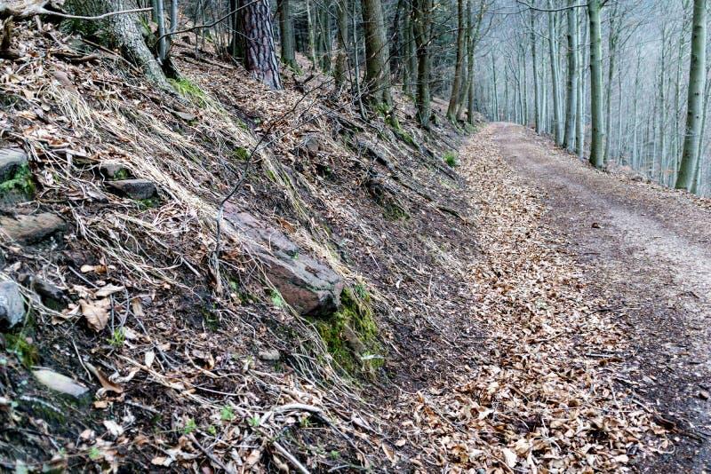 Trajeto de floresta só e assustador fotografia de stock royalty free