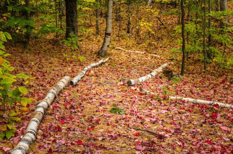 Trajeto de floresta vazio coberto nas folhas de outono foto de stock
