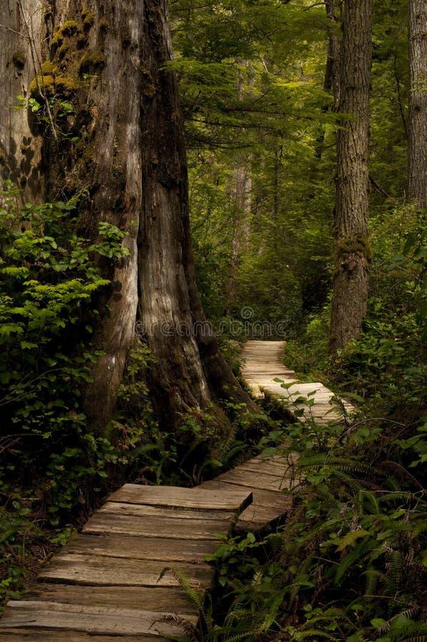 Trajeto de madeira imagens de stock royalty free