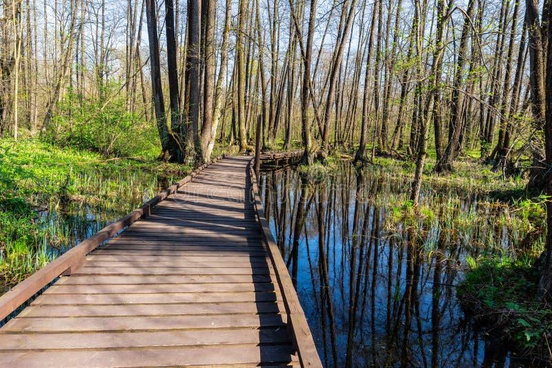 Trajeto de madeira do pé através do pântano na floresta da mola no dia ensolarado fotografia de stock