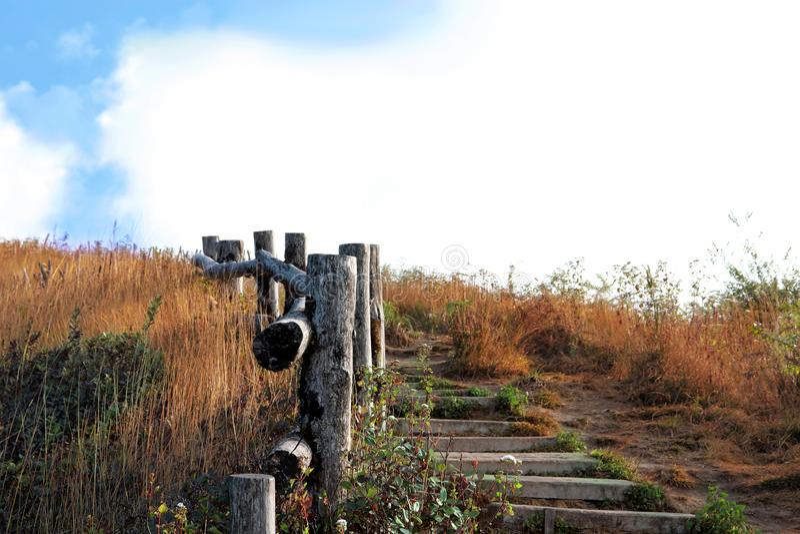 Trajeto de madeira, maneira, trilha das pranchas no parque do campo, fundo da imagem da perspectiva Vista da parte superior do pe foto de stock
