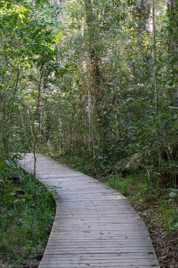 Trajeto de madeira, passeio à beira mar na paisagem da floresta imagens de stock royalty free
