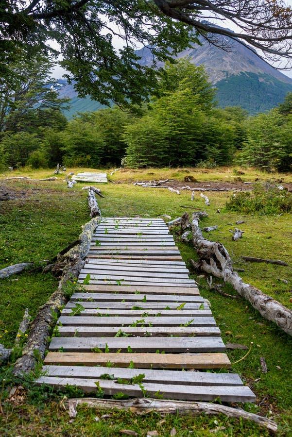 Trajeto de madeira rústico com a área pantanoso, conduzindo a fuga arborizada, na reserva natural de Cerro Alarken foto de stock royalty free