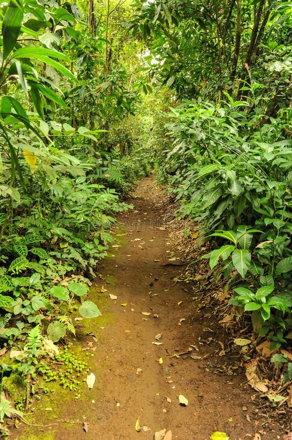 Trajeto de passeio através de uma floresta tripical luxúria foto de stock