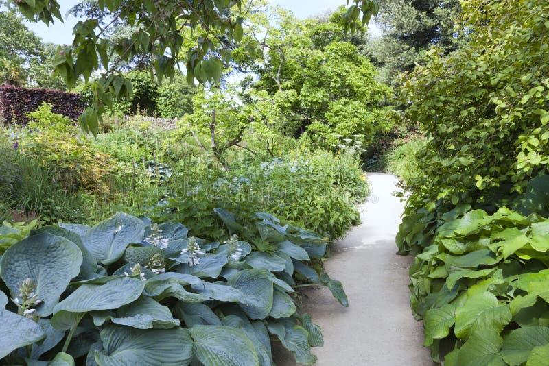 Trajeto de passeio em um jardim inglês frondoso, Cotswolds, dia de verão fotos de stock royalty free