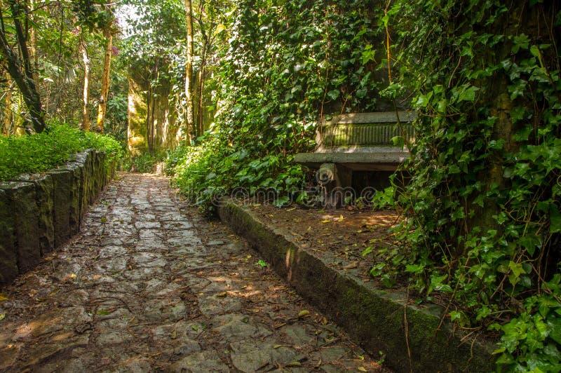 Trajeto de pedra através de uma floresta imagens de stock royalty free