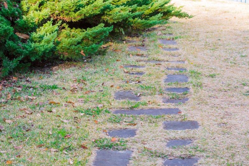Trajeto de pedra na grama seca foto de stock