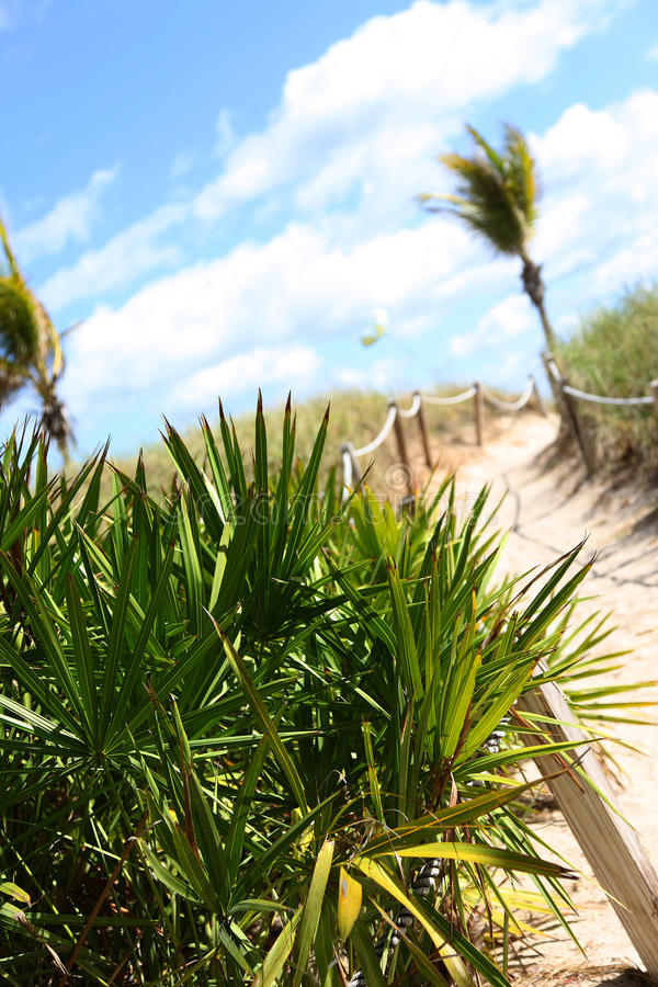 Trajeto de Sandy na praia imagens de stock royalty free