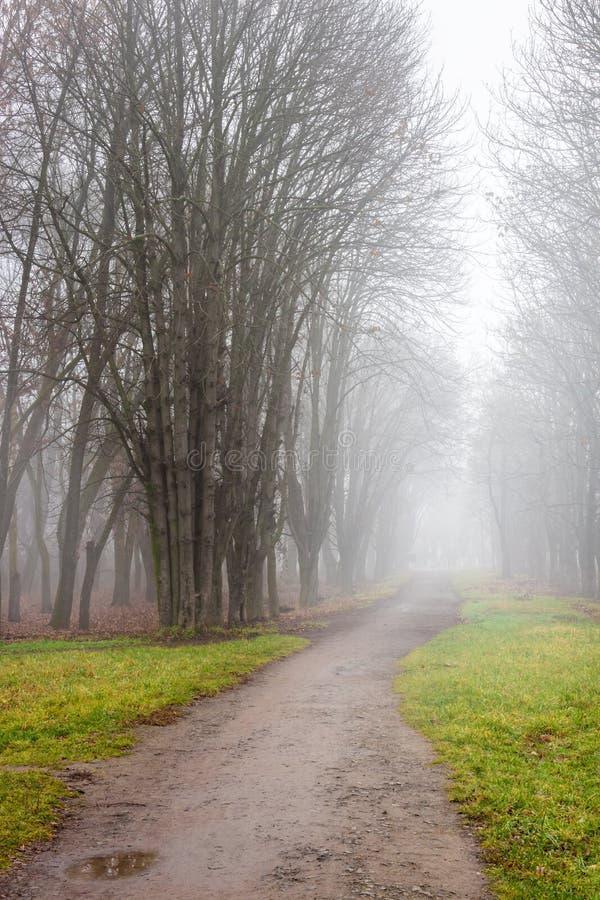 Trajeto dentro à névoa fria no parck do outono imagem de stock royalty free