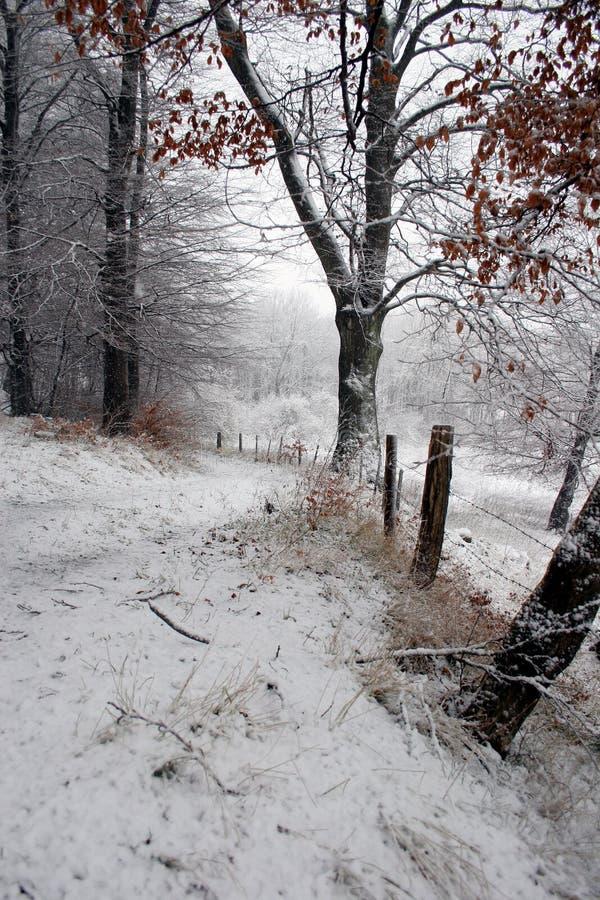 Trajeto do inverno foto de stock royalty free