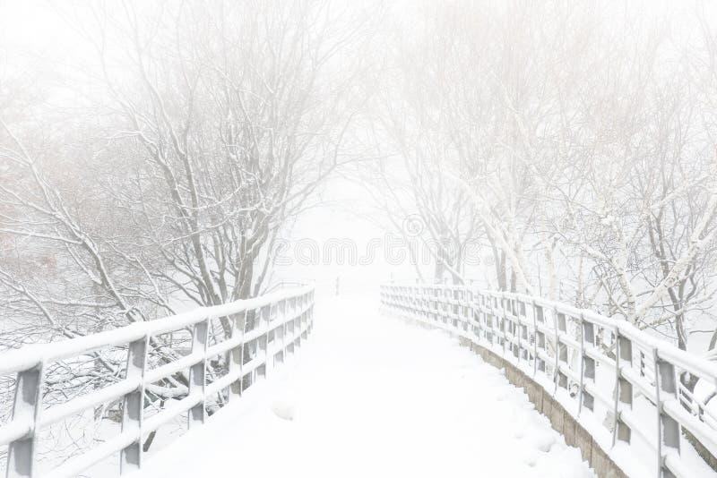 Trajeto do inverno imagens de stock