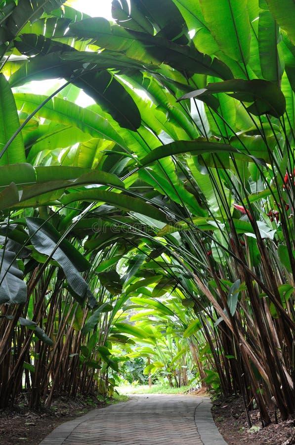 Trajeto do jardim em madeiras de Heliconia foto de stock royalty free