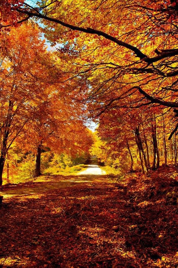Trajeto do outono fotografia de stock
