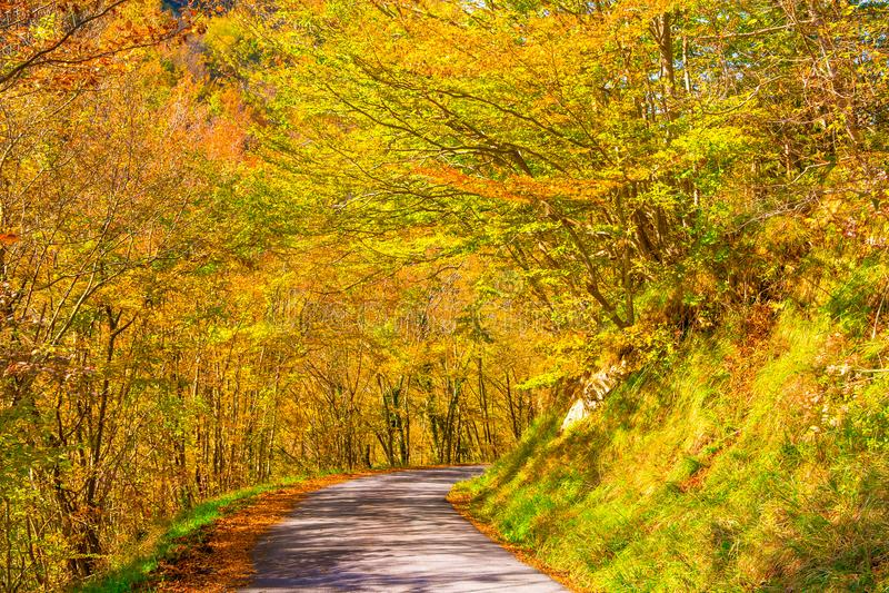 Trajeto do país que corre através das madeiras em um dia do outono, Itália fotografia de stock royalty free
