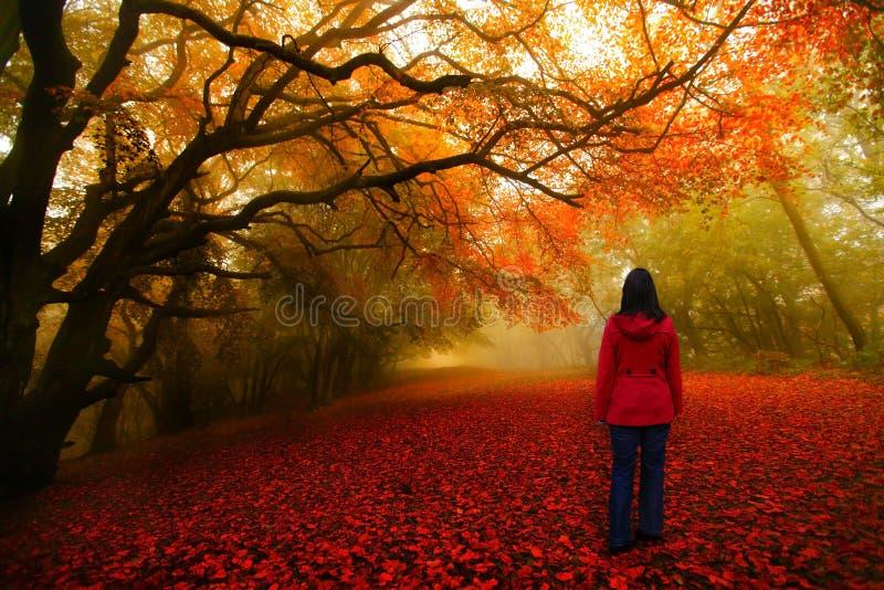 Trajeto do vermelho da floresta do conto de fadas foto de stock