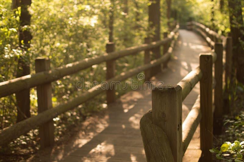 Trajeto e cerca de madeira através de Forest Park fotos de stock