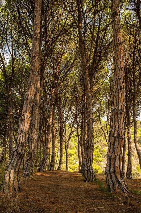 Download Floresta no dia ensolarado foto de stock. Imagem de hiking - 29832104